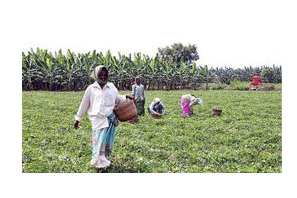Telangana farmers