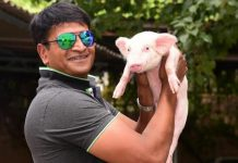 Ravi Babu's piglet movie titled as Adhugo, Ravi babu movie on pig