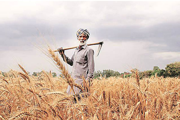 'Note ban has caused Rs 20,000-50,000 per acre loss to farmers