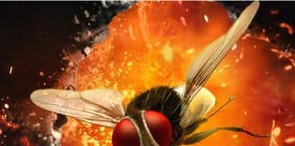 Rajamouli's Eega to be adapted as a TV series