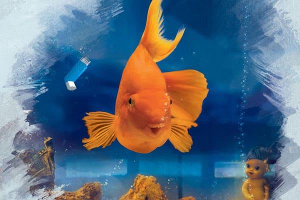 Nani: The Humanitarian Fish