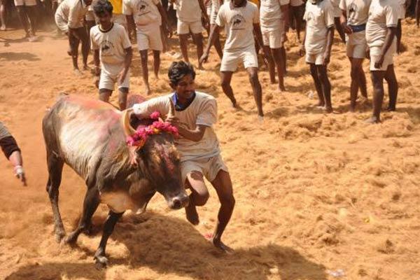 Three Jallikattu spectators die in Tamil Nadu