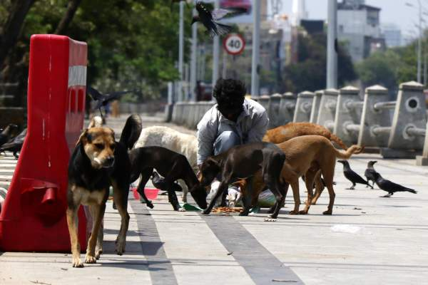 COVID-19: Hyd'bad students turn lifesavers for campus strays, wildlife
